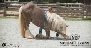 Intro to Liberty & Trick Training Clinic @ Michael Lyons Horsemanship | Randleman | North Carolina | United States