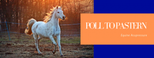 Equine Acupressure Clinic @ Cornerstone Farm | Indian Trail | North Carolina | United States